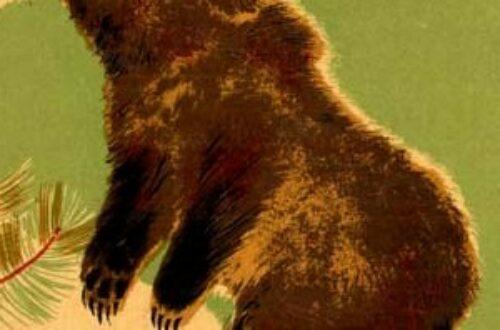 Article : Bourru, l'ours berlinois